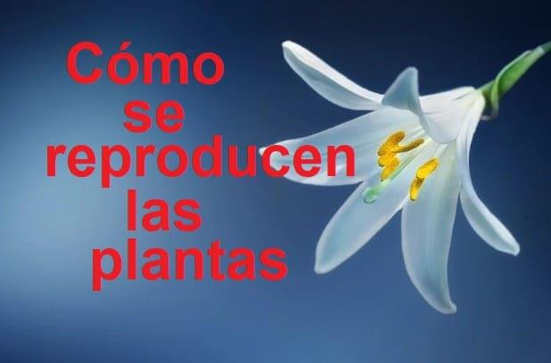 cómo se reproducen las plantas
